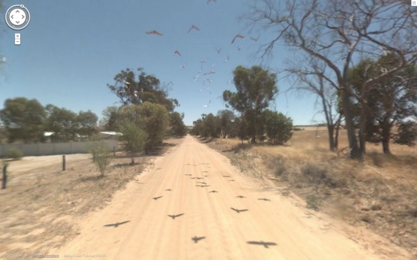 birds over the road western australia